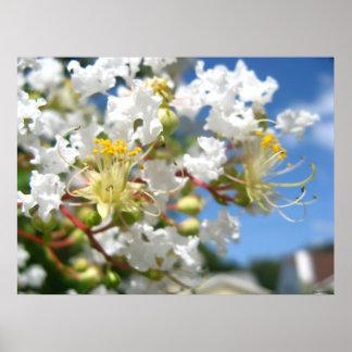 Copie de photo de fleur du Myrte de crêpe grande s Poster