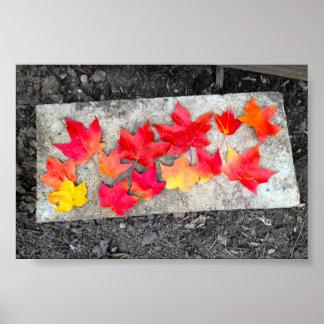 Copie de photo de thanksgiving de feuille d'érable poster
