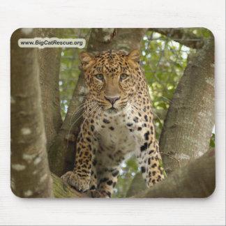 Copie LeopardCheetaro003 Tapis De Souris