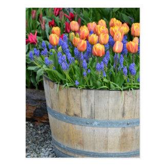 Copie orange de planteur de tulipe de ressort cartes postales