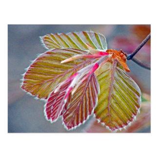 copper beech leaves postcard