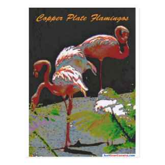 Copper Plate Flamingos Postcard
