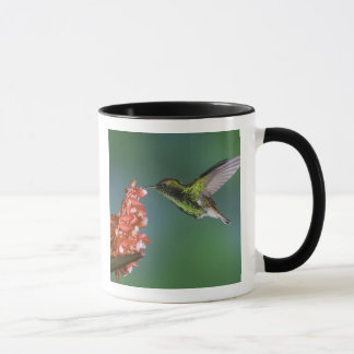 Coppery-headed Emerald, Elvira cupreiceps, Mug