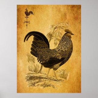 Coq de thanksgiving poster