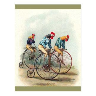 Coqs d'équitation carte postale