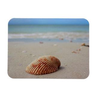 Coquillage sur la plage dans l'aimant de la magnet souple