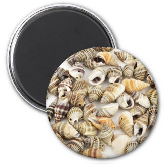 Coquillages | magnet rond 8 cm