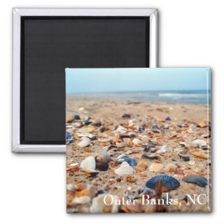 Coquillages sur l'aimant de plage