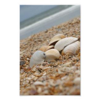 Coquilles de mer sur des images imaginatives de impressions photo