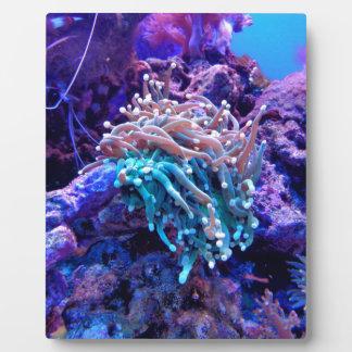 coral-1053837 plaque