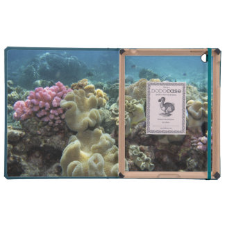 Coral, Agincourt Reef, Great Barrier Reef,