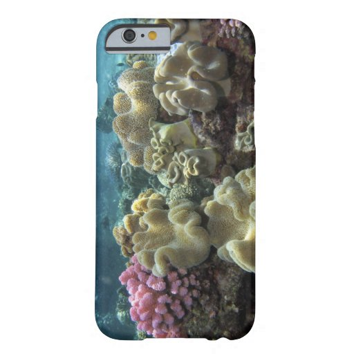 Coral, Agincourt Reef, Great Barrier Reef, iPhone 6 Case