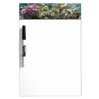 Coral, Agincourt Reef, Great Barrier Reef, Dry Erase Whiteboard