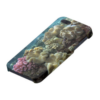 Coral Agincourt Reef Great Barrier Reef iPhone 5 Cases
