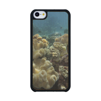 Coral, Agincourt Reef, Great Barrier Reef, Carved® Maple iPhone 5C Case