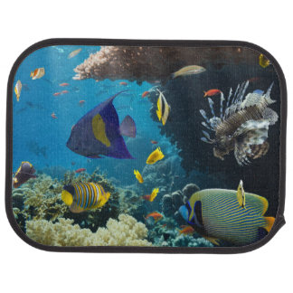 Coral and fish in the Red Sea, Egypt Auto Mat