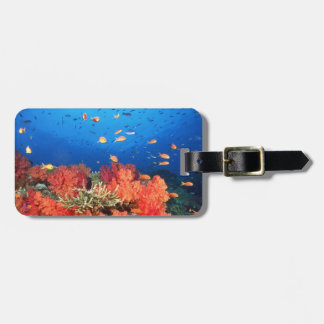 Coral and fish luggage tag