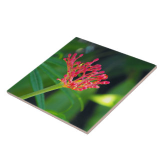 Coral Bush in bloom Ceramic Tiles
