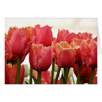 Coral & Gold Fringed Tulips Photograph Card