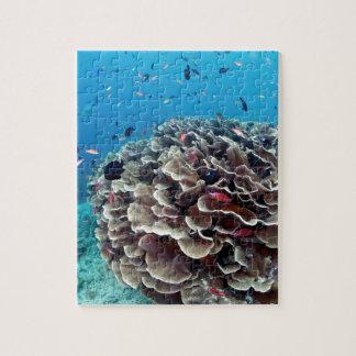 Coral Island Jigsaw Puzzle
