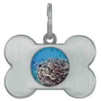 Coral Island Pet Name Tag