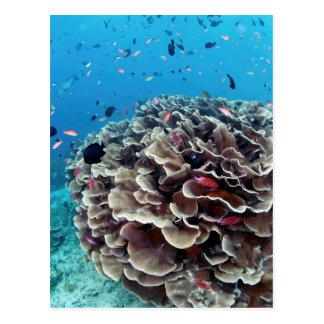 Coral Island Postcard