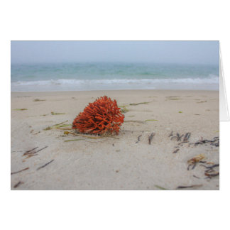 Coral Note Card