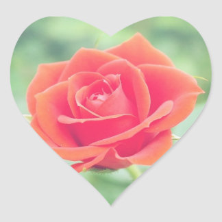 Coral Pink Rose Heart Sticker