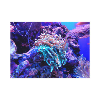 coral reef canvas