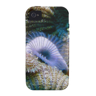 Coral reef vibe iPhone 4 cases