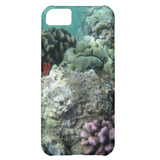 Coral reef iPhone 5C case