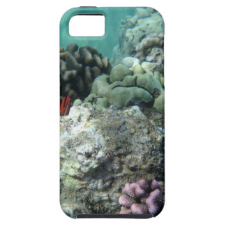 Coral reef iPhone 5 case