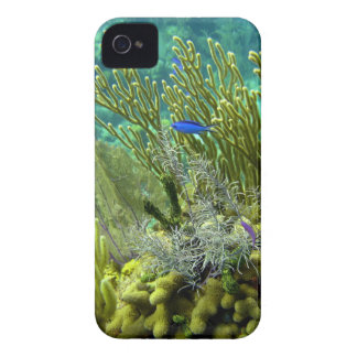 Coral reef iPhone 4 cover