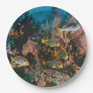 Coral Reef paper plates 9 Inch Paper Plate