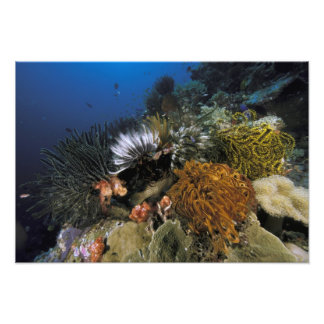 Coral reef. photo art