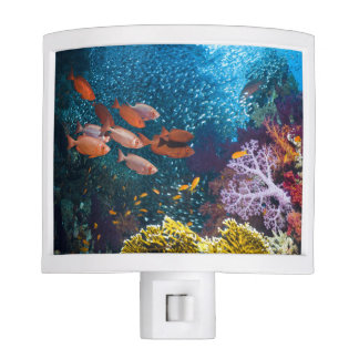 Coral Reef Scenery | Bigeye Or Goggle-Eye Nite Lites