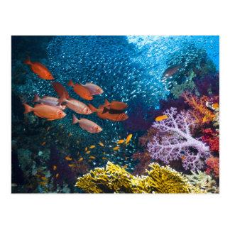 Coral Reef Scenery   Bigeye Or Goggle-Eye Postcard