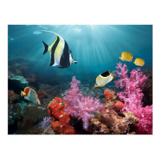 Coral Reef Scenery | Moorish Idol Postcard