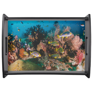 Coral Reef serving trays