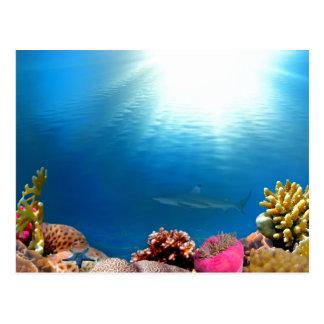 Coral Reef & Shark Postcard