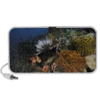 Coral reef. notebook speakers