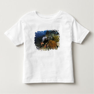 Coral reef. t-shirts