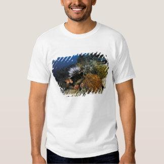 Coral reef. tee shirts