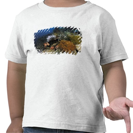 Coral reef. t shirts