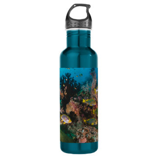 Coral Reef water bottles
