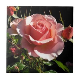 Coral Rose Ceramic Tile