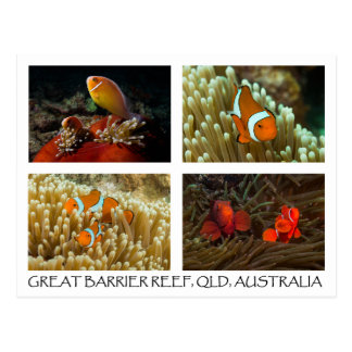 Coral Sea Postcard - Clownfish