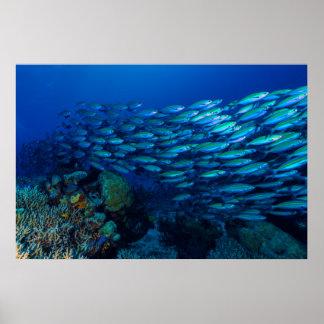 Coral Sea Tropical Fish School Poster