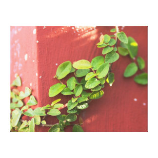 Coral Vine Canvas Print