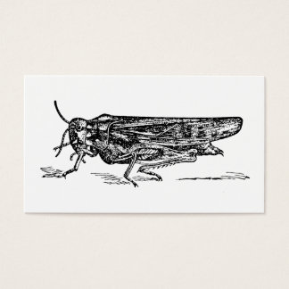 Coral Winged Locust Orthopterology BW Drawing Business Card